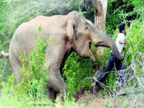 Compensation-amount-to-victims-trampled-by-elephants