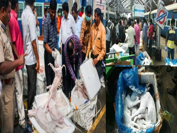 DOG MEAT ISSUE RESULT TODAY