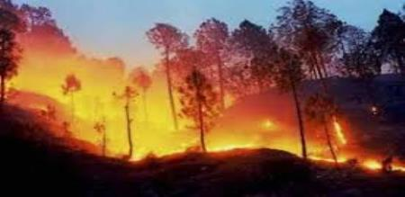 who is the culprit in kurangani forest fire