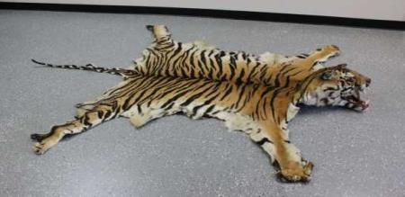 two men tried to sell the tiger in arrested