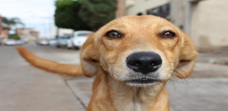 street dog travel for 400 k.m. till Tirupathy