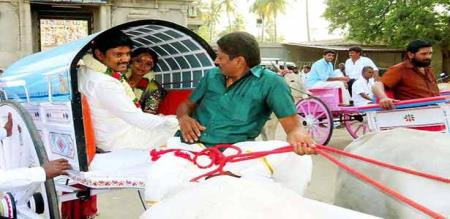 a Bullock traveling in new married life partners