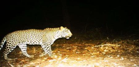 in kutralam a cheetah now on city peoples panic