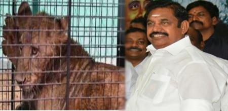 tamilnadu cheif minister named jaya in lion