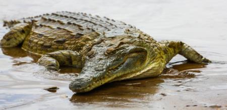 school boy save his uncle from crocodile