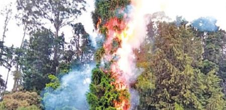 IN OOTY BOTANY PARK, A LIGHT WAS TOUCHED A TREE., A TREE FIRED
