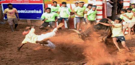 Pudukottai Jallikattu Finished Now