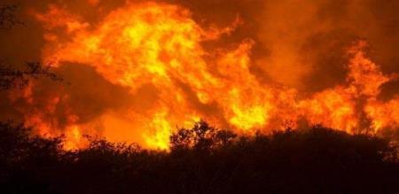 again forest fire in Bodi hill
