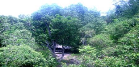 erode forest ranger forgery