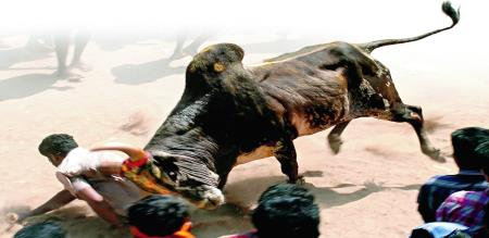 one man death in jallikattu function