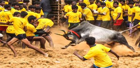 jallikattu game conducted in ariyalur district