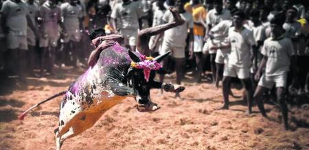 jallikattu first time in erode