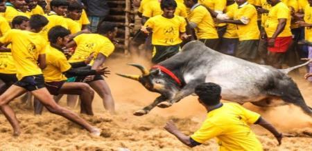 Madurai Jallikattu Sports