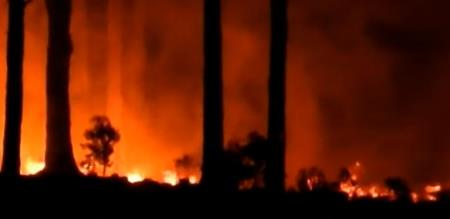 in kodaikanal affected by forest fire
