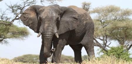 A MILK MAN GOING TO SERVE MILK., A ELEPHANT REVENGES FOR THAT MILKMAN.