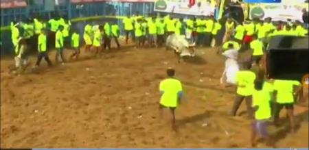 Jallikattu Game One Visitor Death