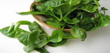 daily to eat pasalaikeerai to gain more health
