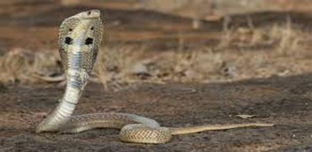 a girl was died by a snake biting