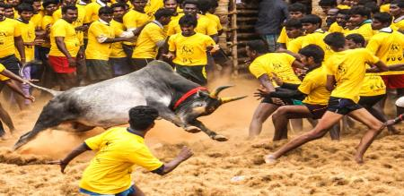 Avaniapuram Jallikattu case in High Court
