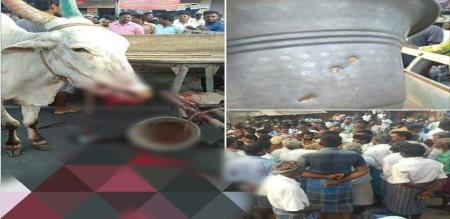 villupuram people protest for unknown person firing the ox