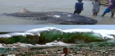 A Shark death in thuthukudi