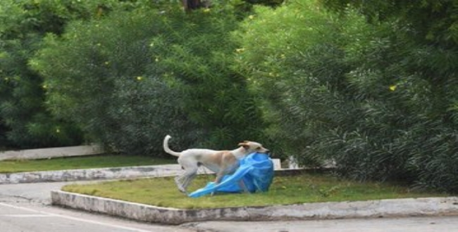 Dog pick PPE dress in Coimbatore Codissia