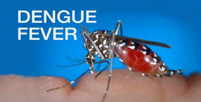 in Coimbatore and tirupur child injured dengue fever