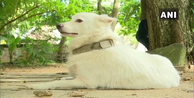 kerala dog for illegal affair