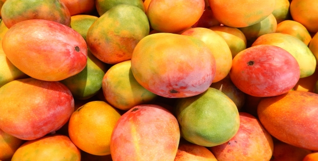 Benefits of mango in Tamil
