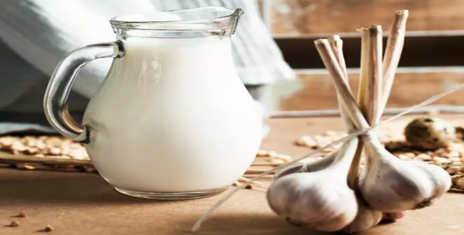 milk with garlic benefits in tamil