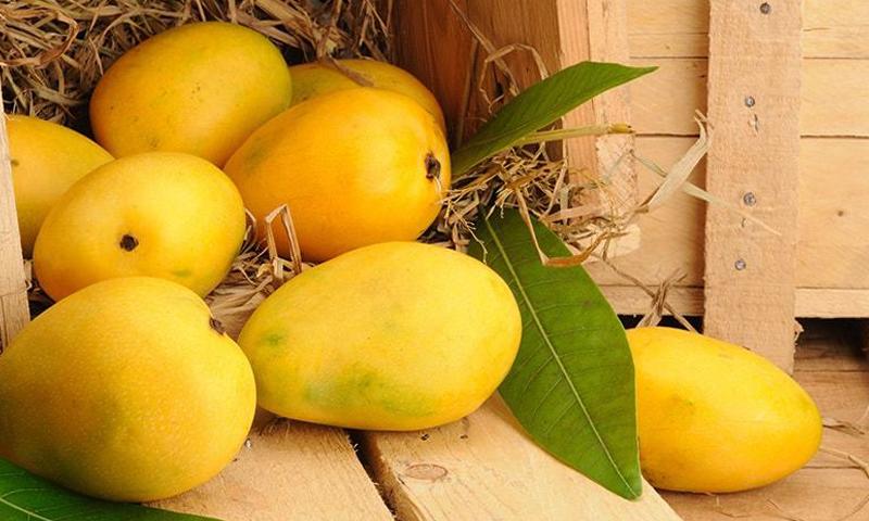 mango, seithipunal