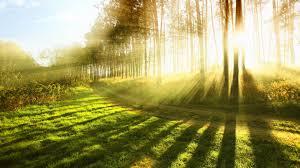 sunlight, nature images,