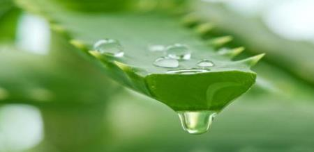 uses and benefits of aloevera gel