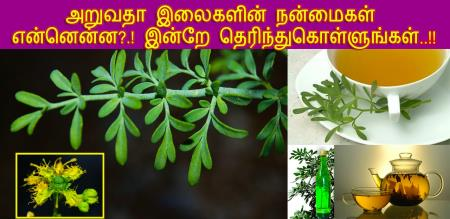 how to improve health by aruvatha leafs