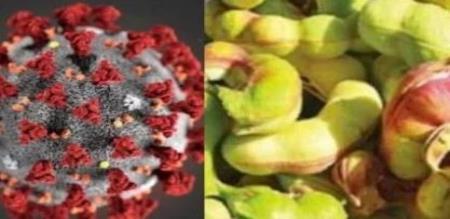 pondicherry mla about coorna virus