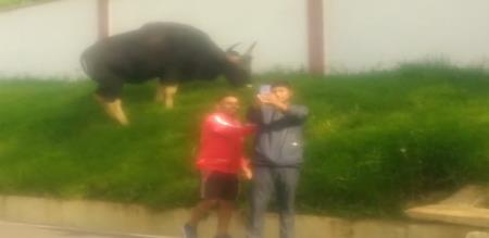 selfie with forest bull