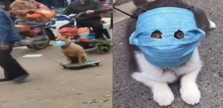 mask for dogs in china