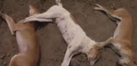 in vellore 7 dogs killed by culprit police investigation going on