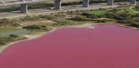 in Australia a lake color change red due to high temperature causes