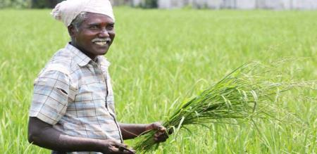 agriculture department introduced new type of seeds