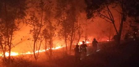 in china forest fire 19 fire and dept officers died