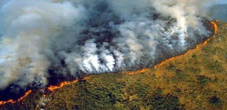 Amazon rainforest on fire..