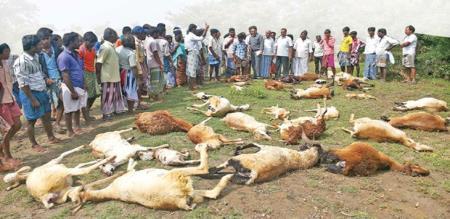goat dead in virudhunagar