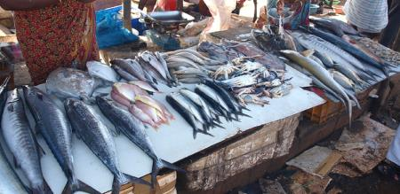 fish price decrease