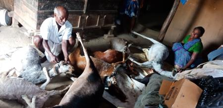 in cudallore man goats killed due to past fight between a two man