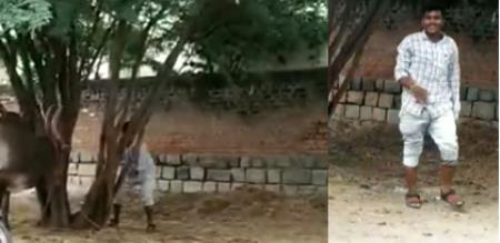 Krishnagiri Jallikattu Kaalai murder by kanja culprit