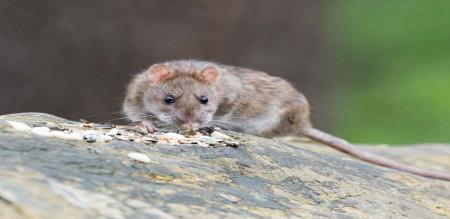 MOUSE FOOD DO WANT GO TO THIS PLACE