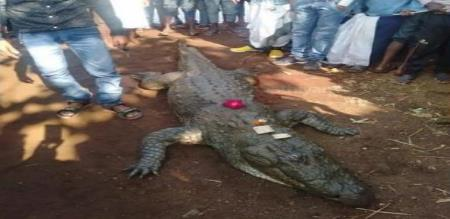 a crocodile is died in sathiskar state., village peoples feeling sad