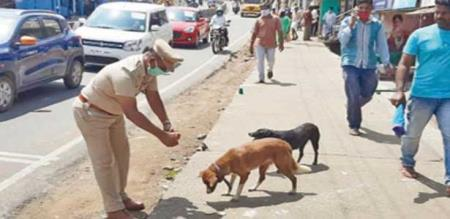 Nilgiris police officer gives food for dogs
