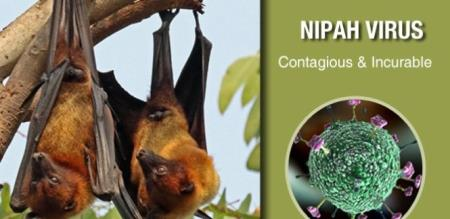 tamilandu and kerala borders hospital high alert to nipah virus
